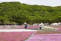 Roze mos bij MT fuji Royalty-vrije Stock Foto's