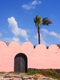 Roze muur met houten deur en palm stock foto