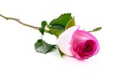 Roze nam bloem isoleren op witte achtergrond toe stock foto