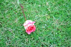 Roze nam bloem op gras toe royalty-vrije stock afbeelding