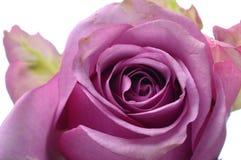 Roze nam bloem toe Royalty-vrije Stock Afbeelding