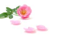 Roze nam bloemblaadjes op witte achtergrond voor valentijnskaartendag die worden geïsoleerd toe Stock Foto's