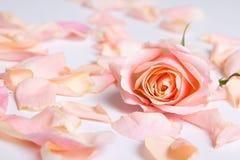 Roze nam bloemblaadjes over witte achtergrond toe Royalty-vrije Stock Afbeelding
