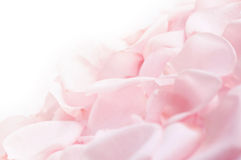 Roze nam bloemblaadjes toe stock foto's