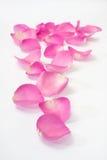 Roze nam bloemblaadjes toe als weg Royalty-vrije Stock Foto