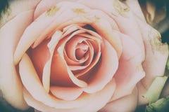Roze nam bloemen toe Royalty-vrije Stock Fotografie