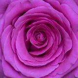 Roze nam bloesemmacro toe Royalty-vrije Stock Foto