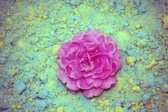 Roze nam kleuren kinetisch zand toe Stock Foto's