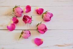 Roze nam knoppen op wit hout toe Royalty-vrije Stock Foto's
