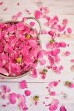 Roze nam knoppen op wit hout toe Royalty-vrije Stock Fotografie