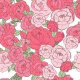 Roze nam op de witte achtergrond toe Royalty-vrije Stock Foto