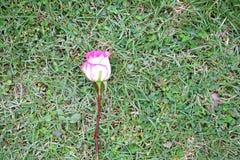 Roze nam op grasachtergrond toe stock fotografie