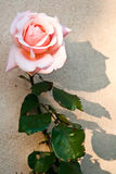 Roze nam tegen muur toe Stock Fotografie