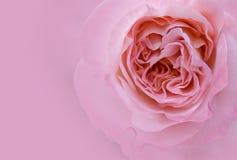 Roze nam toe Royalty-vrije Stock Afbeelding