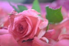 Roze nam toe Royalty-vrije Stock Afbeeldingen