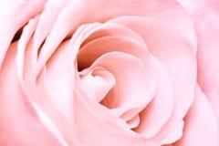Roze nam toe Royalty-vrije Stock Foto