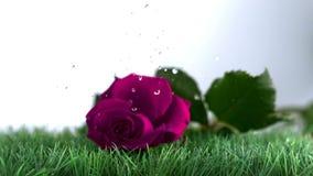 Roze nam vallend en stuiterend op een groene grond toe stock video