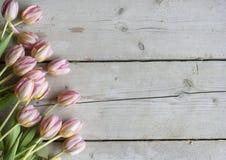 Roze Nederlandse bloeiende tulpen op doorstane schuur houten achtergrond royalty-vrije stock fotografie