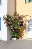 Roze oleander Stock Fotografie