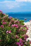 Roze oleanderbloemen, strand met paraplu's en het blauwe overzees Stock Fotografie