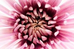 Roze omhels Stock Fotografie