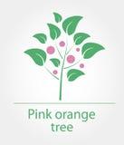 Roze oranje boom Stock Afbeeldingen