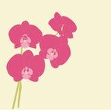 Roze orchideeën royalty-vrije illustratie