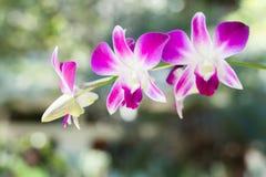 Roze Orchideeën in een Tuin Royalty-vrije Stock Foto