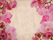 Roze orchideeën op retro grungeachtergrond Royalty-vrije Stock Fotografie