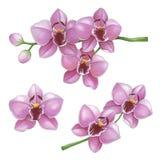 Roze orchideeënbloemen op een witte achtergrond Schets in alcoh wordt gedaan die Stock Fotografie