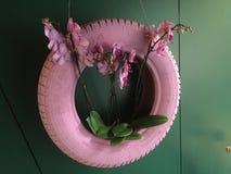 Roze orchideeëndecoratie Stock Foto's