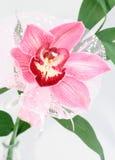 Roze orchidee royalty-vrije stock fotografie