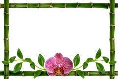 Roze orchidee royalty-vrije stock afbeeldingen