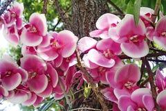 Roze Orchidee Royalty-vrije Stock Foto