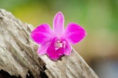 Roze orchidee die op de vloer leggen Stock Fotografie