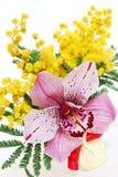 Roze orchidee en mimosa'sboeket Stock Foto's