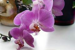 Roze orchidee met een vage achtergrond, Mooie roze orchidee in een pot op de vensterbank stock foto's