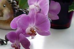 Roze orchidee met een vage achtergrond, Mooie roze orchidee in een pot op de vensterbank royalty-vrije stock afbeelding