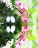 Roze orchideebloem en bezinning in het Water Royalty-vrije Stock Afbeeldingen