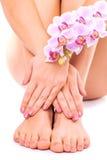 Roze pedicure en manicure met orchideebloem Stock Foto's