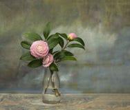 Roze Perfectie Camellia Vintage Still Life Stock Fotografie