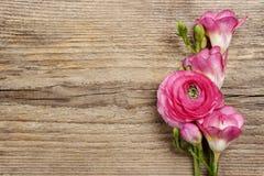 Roze Perzische boterbloemenbloem en fresiabloem royalty-vrije stock fotografie
