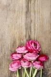 Roze Perzische boterbloemenbloem (ranunculus) stock afbeeldingen