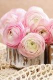 Roze Perzische boterbloemenbloemen (ranunculus) Stock Fotografie