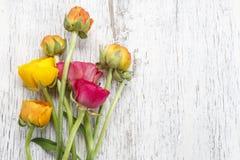 Roze Perzische boterbloemenbloemen (ranunculus) op wit hout Stock Foto's