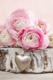Roze Perzische boterbloemenbloemen & x28; ranunculus& x29; royalty-vrije stock foto's