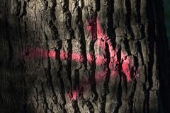 Roze pijl op een boomboomstam stock fotografie