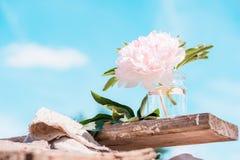 Roze pioenbloem tegen de achtergrond een blauwe hemel royalty-vrije stock afbeeldingen
