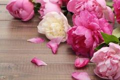 Roze pioenen Stock Foto's