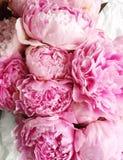 Roze pioenen Stock Foto